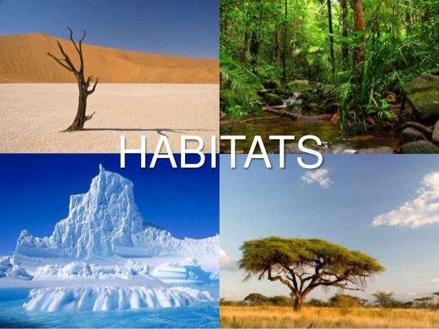 2.3 Habitats - Teleskola