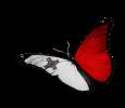 MalteseButterfly