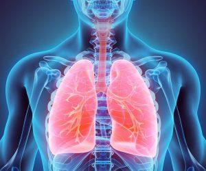 lungs II